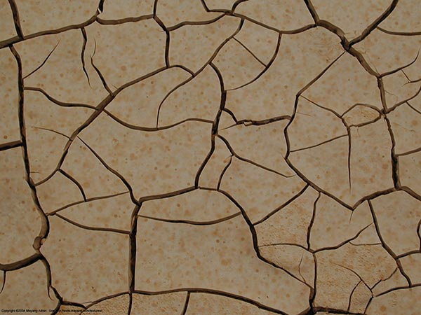 Cracks appearing in dried mud